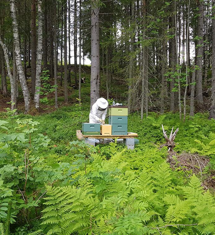 Örnsköldsviks biodlarförening